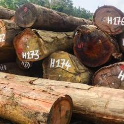 ''Traditional authority' linked to rates of deforestation in Africa